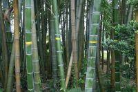 それでも竹林はまだジャングル