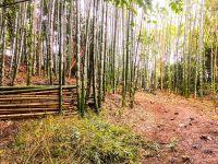 竹林整備・山林整備