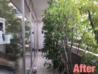 津市剪定|庭木の全体お手入れ作業