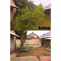 津市伐採|お庭全体庭木伐採作業