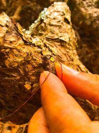 亀山市伐採|松枯れ伐採作業