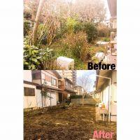 桑名市伐採作業事例|三重県剪定伐採専門店 剪定屋空